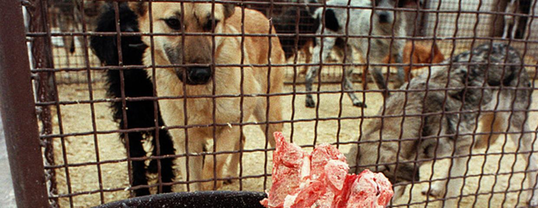 Dieta BARF dla psa i kota - surowe mięso