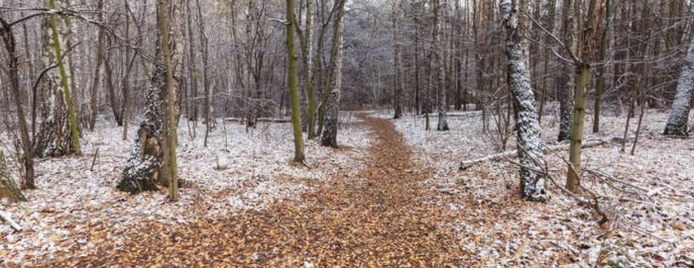 pogoda na piatek mróz i powrót zimy