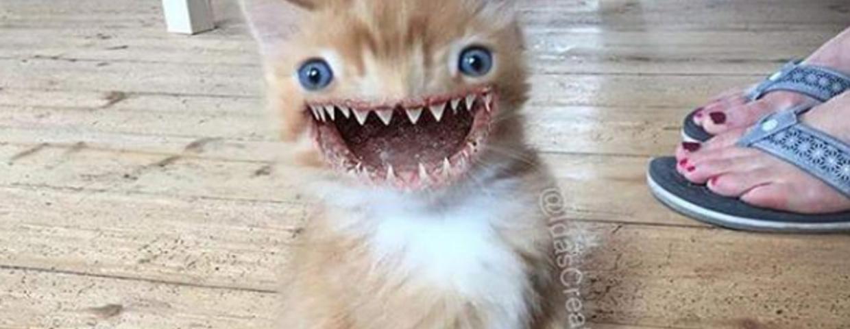 Słodkie i urocze zwierzęta zamienione w potwory z horrorów