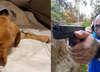 Marcin Różal Różalski (MMA, KSW) i nagroda pieniężna za wskanie osoby, która znęcała się nad psem (Oli). Biuro Ochrony Zwierzęt pomaga skatowanemu psu