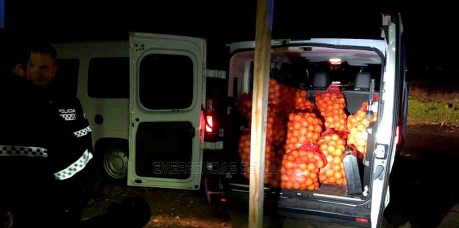 Ukradli 4 tony pomarańczy. Przewozili je osobówkami