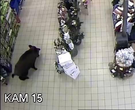 Dzik w Polsce w sklepie
