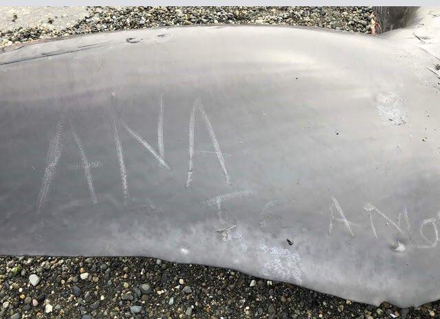Wieloryb na plaży