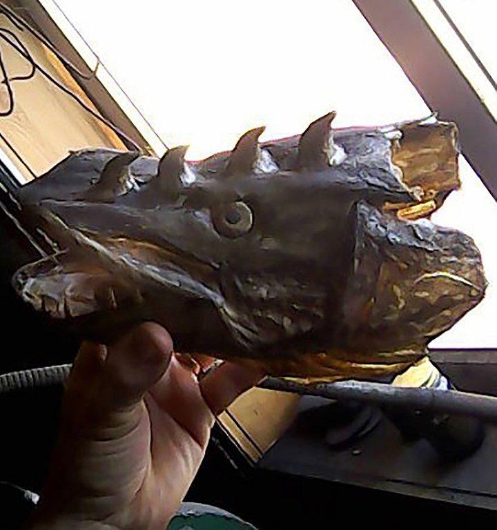 Ryba Rosja mutacja