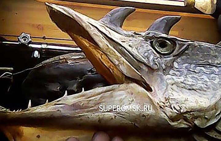 Rosyjska ryba mutacja