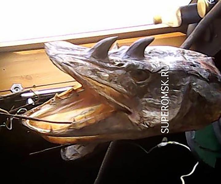 zmutowana ryba z Rosji
