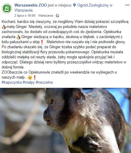 warszawskie zoo małpa śmieci karmienie