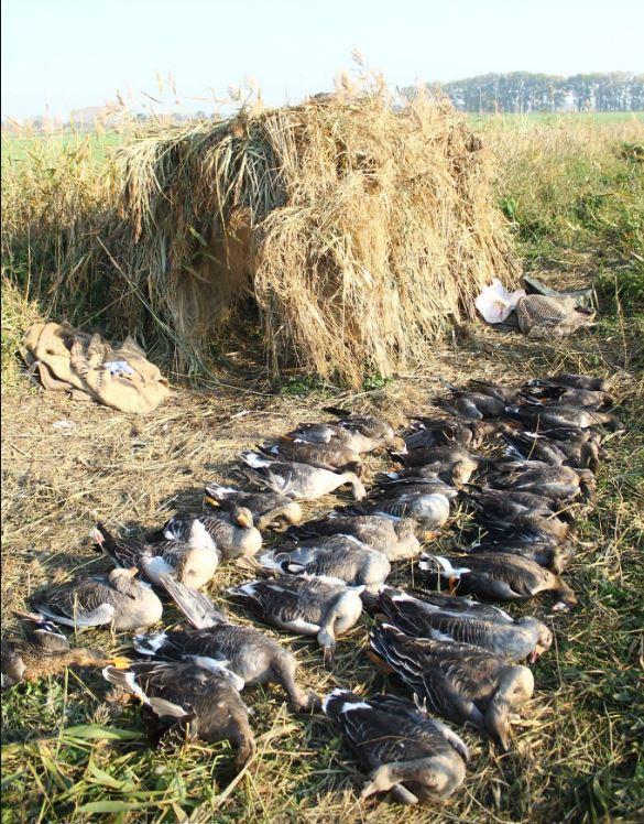 Zalew Wiślany - myśliwi urządzili polowanie na ptaki
