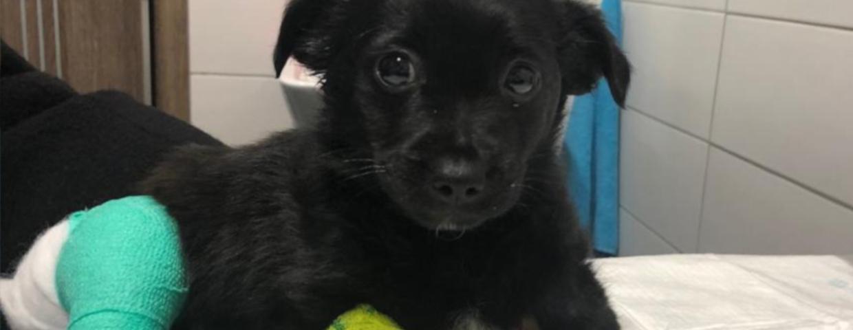 Krakowskie Towarzystwo Opieki nad Zwierzętami (KTOZ)  opisuje przypadek znęcania się nad psem. Kierowca przejechał celowo szczeniaka. Teraz jest poszukiwany